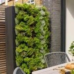 Gardurile si Decorarea Zidurilor in Gradina